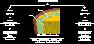 Información células